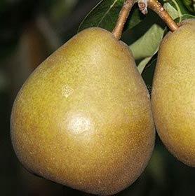 Owocowy Zakątek